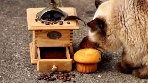 Einige Lebensmittel sind für Katzen giftig.