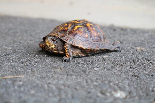 Bei RespekTurtle steht die Schildkröte im Mittelpunkt. (Quelle: awestfrl (CC0-Lizenz)/ pixabay.com)