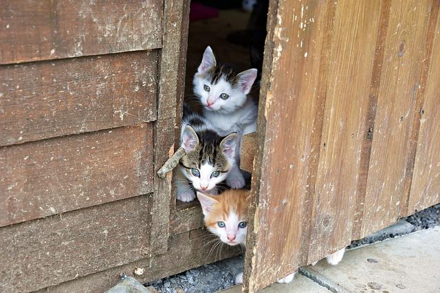 Nicht nur kleine Kätzchen finden bei der Tierhilfe Gerasdorf ein neues Zuhause. (Quelle: PhilippT (CC0-Lizenz)/ pixabay.com)