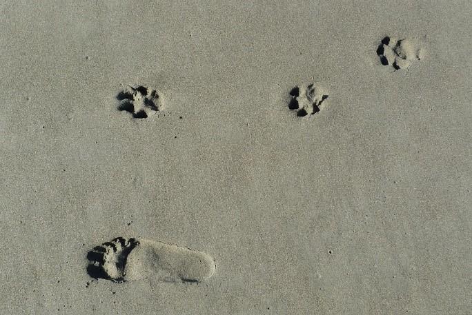 Spuren im Sand: Wer es schafft, nimmt den Hund mit auf Reisen. Für alle anderen gibt es gute Unterbringungsoptionen.