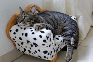 Im Urlaub die Seele baumeln lassen: In Tierpensionen finden Katzen eine liebevoll ausgestattete Umgebung.