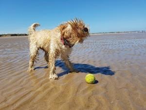 Was für ein nasser Spaß: An Nord- und Ostsee verleben Hunde mit ihren Besitzern eine tolle Urlaubssaison.