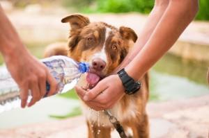 Bei Hitze muss auch für den Hund Wasser mitgenommen werden.