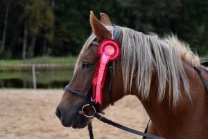 Mit einem Reitabzeichen können Reiter ihre Reitkenntnisse nachweisen.