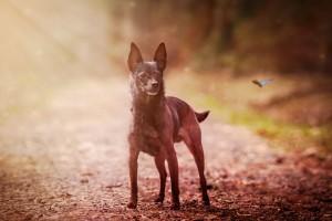 Spaziergänge tun auch alten Hunden gut.