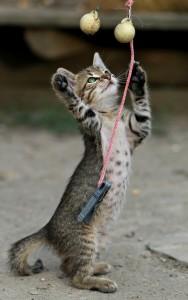Katzen spielen gerne.