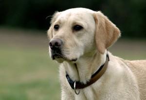 Auf hellem Fell lassen sich bei kurzhaarigen Hunden Zecken oft gut erkennen und rechtzeitig absammeln.