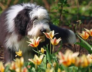 Mit dem Frühling kommen leider auch die Zecken.