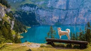 Hunde sind auf vielen Reisen ideale Begleiter