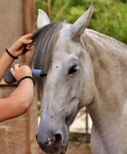 Pferde genießen die Berührungen und lassen sich gerne pflegen.