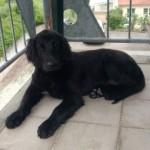 Profile picture of Finja
